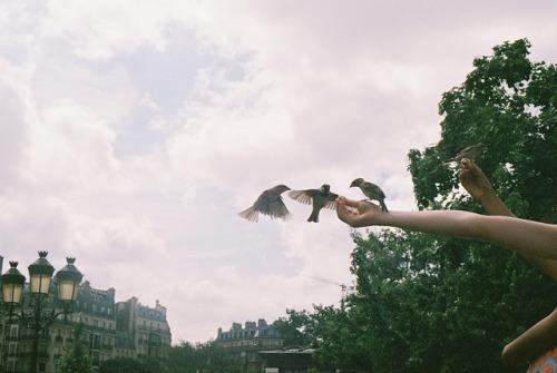 all-around-the-world-birds-camera-france-Favim.com-2650506